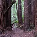 Redwood Grove by Warren Thompson