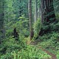 Redwood Park Trail by Greg Vaughn - Printscapes