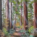 Redwood Path by Joni McPherson