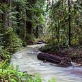 Redwood Stream by Daryl L Hunter