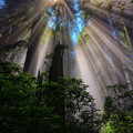 Redwood Sunbeams by Greg Norrell
