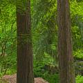 Redwoods #2 by John Stuart