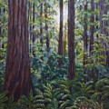 Redwoods by Amelie Simmons