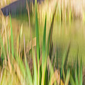 Reed Abstract II by Kate Brown