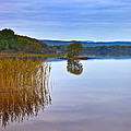 Reeds And An Islet In Lough Macnean by Panoramic Images
