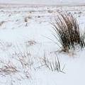 Reeds And Snow by Helen Northcott