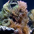 Reef-3 by Karen McNamara