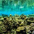 Reef At Ahnd Atoll by Dan Norton