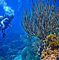 Reef Dive by JS Stewart