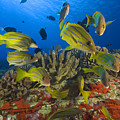 Reef Scene by Dave Fleetham - Printscapes
