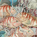 Reef Story by Liduine Bekman