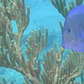 Reef Tang by Chad Natti