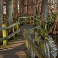 Reelfoot Lake 001 by Lance Vaughn