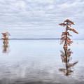 Reelfoot Lake 60 by Jim Dollar