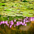 Reflected Flowers And Lilies by Paul Kloschinsky