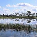 Reflected Pond by Rosalie Scanlon