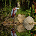 Reflecting On Lunch by Jeffrey Jensen