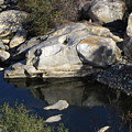 Reflecting Rock-sequoia National Park by DEBRON Art
