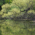 Reflecting Spring Green by Ann Horn
