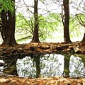Reflecting Tree Trunks by Joan Laine