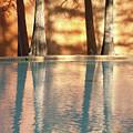 Reflecting Trees by Ken Kirk