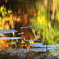 Fall Reflections 5 On Jamaica Pond by Giora Hadar