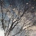 Reflection by Derek Selander