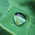 Reflection In A Dew Drop by Gemma Fox