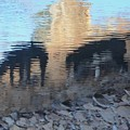 Reflection Of Dogs by Robert Buderman