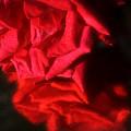 Reflection Of Red Roses by Damijana Cermelj