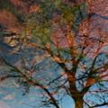Reflection Of Self by Eva Maria Nova