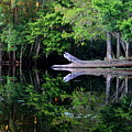 Reflection Off The Withlacoochee River by Barbara Bowen