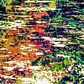 Reflection On Oscar - Claude Monet's  Garden Pond  by D Davila