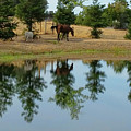 Reflection On The Water by Pamela Walton
