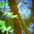 Reflection by Susan Lafleur