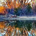 Reflection  by Tim Clark
