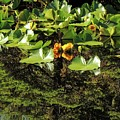 Reflections And Yellow Pond Lily by NaturesPix