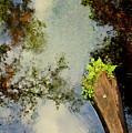 Reflections by Dario Boriani