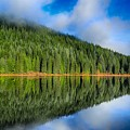 Reflections In Green by Lynn Hopwood