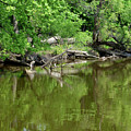 Reflections In Green by Paula Joy Welter