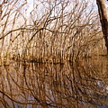 Reflections In The Swamp by Jennifer Capo