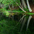 Reflections Of A Forest by Idaho Scenic Images Linda Lantzy