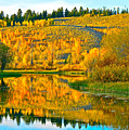 Reflections Of Aspen Gold by Don Mercer