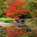 Reflections Of Autumn by Jean Haynes