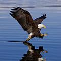 Reflections Of Eagle by John Hyde - Printscapes