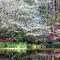 Reflections Of Spring by Gayle Miller