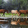 Reflections Of Wild Horses In The Salt River by Dave Dilli