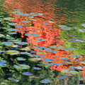 Reflections On A Lily Pond by Vicki Hone Smith