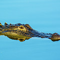 Reflective Gator by John Ruggeri
