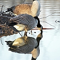 Reflective Geese by Bonfire Photography